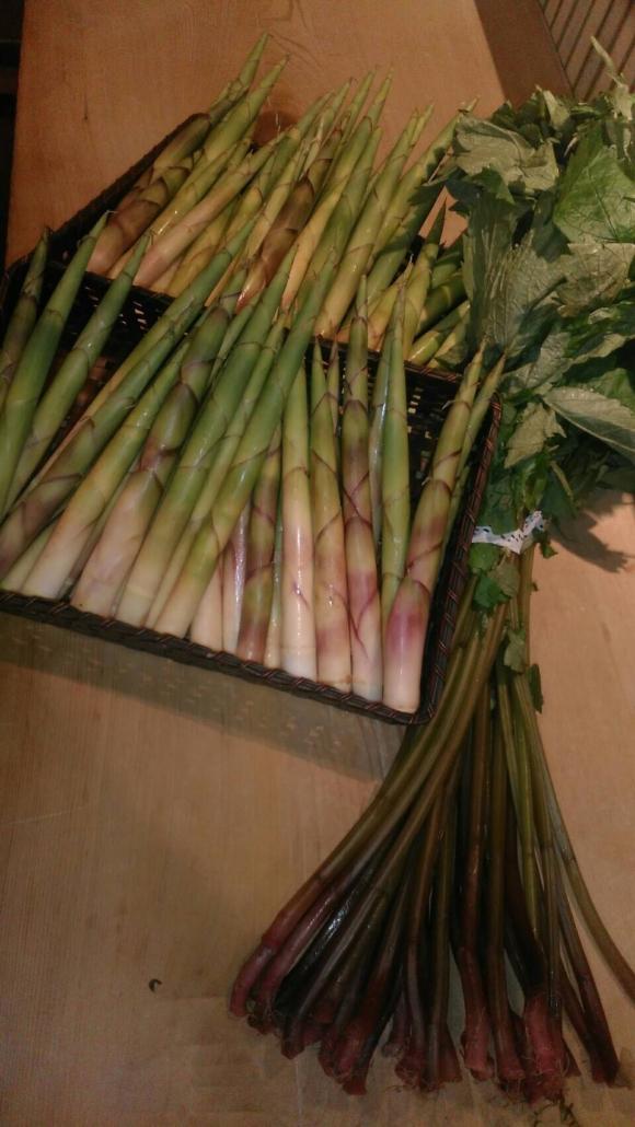 根曲がり竹とアカミズ